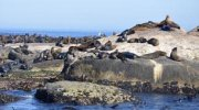 Boat Trips from Hout Bay to Seal island (Duiker Island)