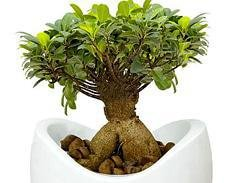 Pot plants for the office Eastern Cape