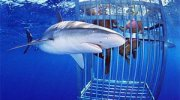Shark Cage Diving with Great Whites, Gansbaai, South Africa