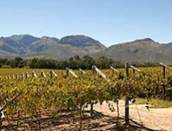 Paarl Vineyards
