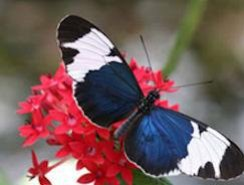Paarl Butterfly World