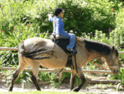 using horses to improve the emotional development of abused children