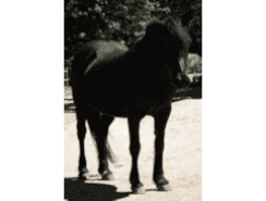 Grace - her soft nature is ideal for equine assisted therapy for chidren