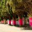 What Cape Town's pink trees represent