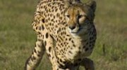 The Ann Van Dyk Cheetah Centre