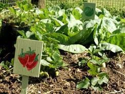 Teaching pre-school children to grow fruit and vegetables