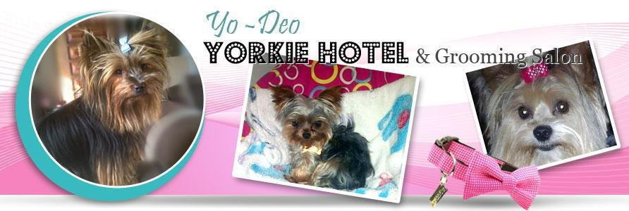 a place where one can leave your Yorkie's